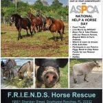 ASPCA Help a Horse Day